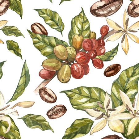cafe colombiano: Red coffee arabica beans on branch with flowers isolated, watercolor illustration.