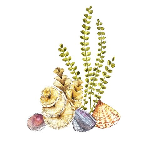 Compositions Seaweed sea life and corals object isolated on white background. Watercolor hand drawn painted illustration. Underwater watercolor background illustration. Stock Illustration - 77074951