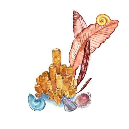Compositions Seaweed sea life and corals object isolated on white background. Watercolor hand drawn painted illustration. Underwater watercolor background illustration Stock Photo