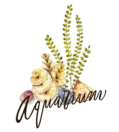 Word-aquarium. Compositions Seaweed sea life and corals object isolated on white background. Watercolor hand drawn painted illustration. Underwater watercolor background illustration.