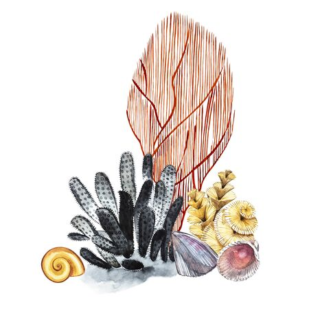 Compositions Seaweed sea life and corals object isolated on white background. Watercolor hand drawn painted illustration. Underwater watercolor background illustration Stock Illustration - 79274036