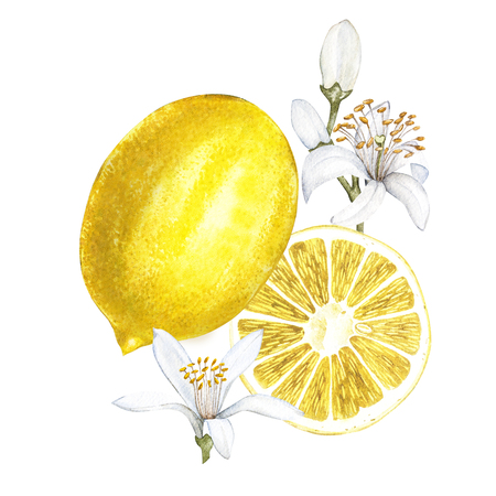 Fresh watercolor lemon with flowers. Hand drawn botanical illustration