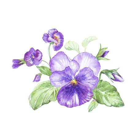 パンジーの花の水彩画のイラスト。花と花のカードです。植物のイラスト。