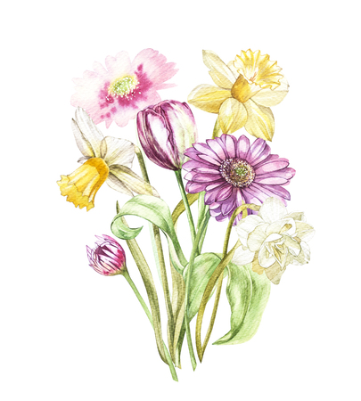 Spring flowers narcissus and tulip, Gerbera isolated on white background. Watercolor hand drawn illustration. Фото со стока