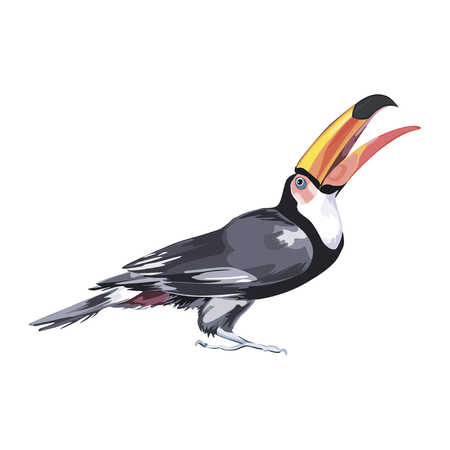 Black toucan watercolor illustration isolated on white background.