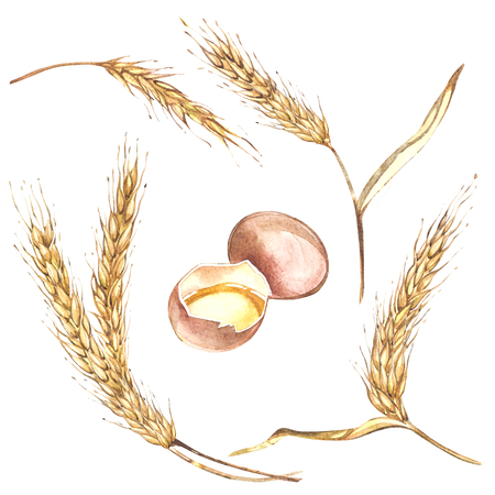 An egg and wheat together illustration hand drawn painted watercolor. Isolated on white background