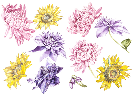victorian wallpaper: Big Set Watercolor collection with plants elements - leaf, flowers. Botanical illustration isolated on white background. Floral nature. Sunflowers,Chrysanthemums, and Clematis. Stock Photo