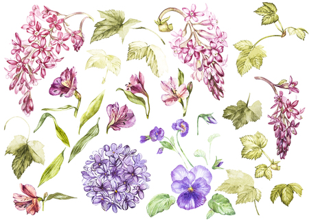victorian wallpaper: Big Set Watercolor collection with plants elements - leaf, flowers. Botanical illustration isolated on white background. Floral nature. Flowers of black currant, Alstroemeria, Lilac and Pansy. Stock Photo