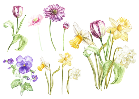 Big Set Watercolor collection with plants elements - leaf, flowers. Botanical illustration isolated on white background. Floral nature. Flowers narcissus and tulip, Gerbera, Pansy. Stock Photo