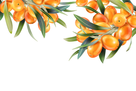 Sea buckthorn isolated on the white. Vector illustration in 3d style. The concept of realistic image of medical plants, herbs. Designed to create package of health, beauty natural products. Illustration