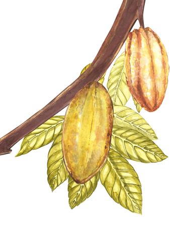 Satz botanische Illustration. Aquarellkakao-Fruchtsammlung lokalisiert auf weißem Hintergrund. Hand gezeichnete exotische Kakaopflanzen. Botanischer Kakaobohnenrahmen. Platz für Text.