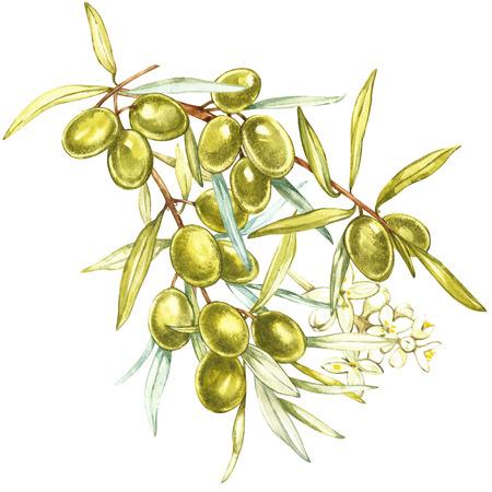 Een tak van sappige, rijpe groene olijven en bloemen op een witte achtergrond. Botanische illustratie voor verpakkingsontwerp.