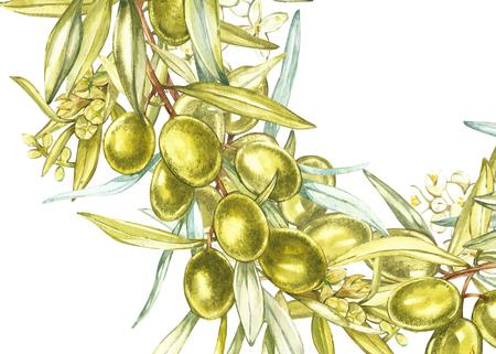 Bandiere orizzontali con olive nere e verdi mature su sfondo bianco. Design per olio d'oliva, imballaggi di oliva, cosmetici naturali, prodotti sanitari. Con posto per il testo. Archivio Fotografico - 89288883