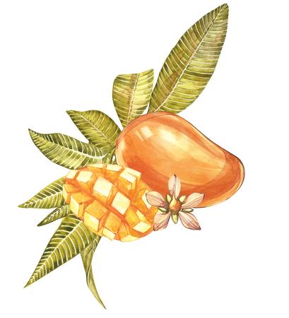 水彩画の植物のイラストのセット。マンゴーの果実と花を白に分離