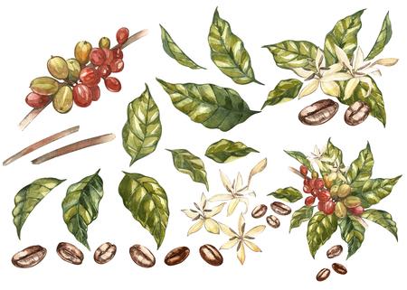 Reeks Rode koffie arabica bonen op tak met geïsoleerde bloemen, aquarel illustratie. Stockfoto