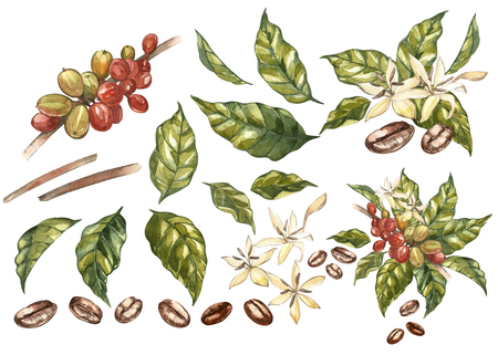 Set of Red coffee arabica beans on branch with flowers isolated, watercolor illustration. Archivio Fotografico