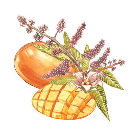 leaf logo: Set of Watercolor botanical illustration. Mango Fruit and flowers isolated on white background.