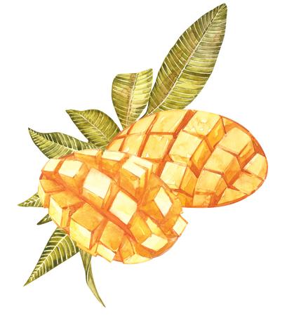 leaf logo: Mango cubes vintage design template. Watercolor botanical illustration. Mango Fruit Isolated on white background