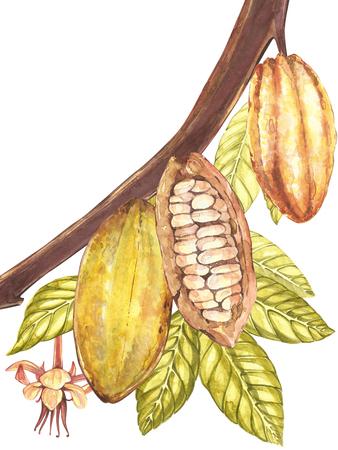 Satz botanische Illustration. Aquarellkakao-Fruchtsammlung lokalisiert auf weißem Hintergrund. Hand gezeichnete exotische Kakaopflanzen. Botanischer Kakaobohnenrahmen. Platz für Text. Standard-Bild
