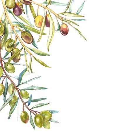 Realistische Illustration des Aquarells der Niederlassung der schwarzen und grünen Oliven lokalisiert auf weißem Hintergrund. Design für Olivenöl, Naturkosmetik, Gesundheitsprodukte. Standard-Bild - 89509288