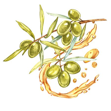 Set A branch of ripe green olives is juicy poured with oil. Drops and splashes of olive oil. Watercolor and botanical illustration isolated on white background.
