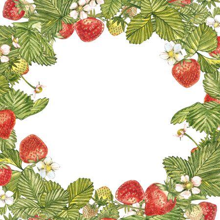 白い背景に熟した赤いイチゴのバナー。包装、天然化粧品、ヘルスケア製品のための設計。テキストの場所付き。 写真素材