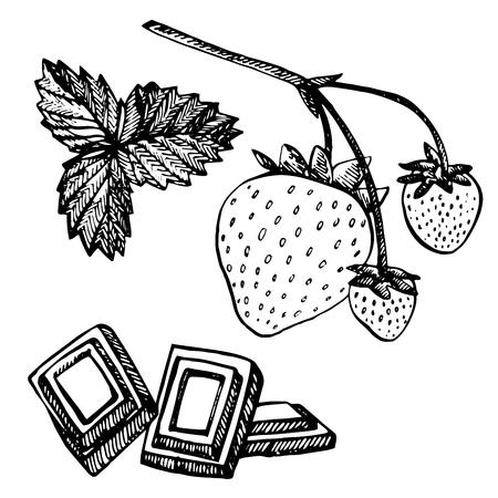 Erdbeer-Vektor-Illustration. Gravierte Stil Illustration. Skizzierte Hand gezeichnete Beere, Blumen, Blätter und Zweige.