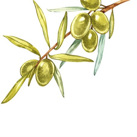 Banners with ripe black and green olives on white background. Design for olive oil, olive packaging, natural cosmetics, health care products. With place for text.