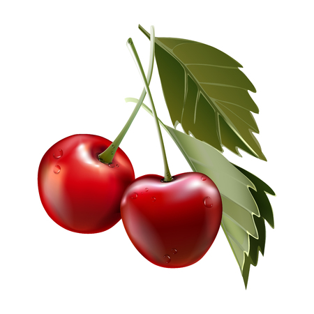 Red cherry. Two ripe berries with stalk. Realistic vector illustration. 3d vector Ilustração Vetorial