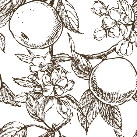 Apple blossom branch isolated on white. Vintage botanical hand drawn illustration. Spring flowers of apple tree. Seamless patterns.