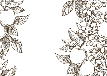 Vector card spring. Black and white blooming branches of apple tree.