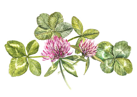 A composition of clover red flowers and leaves - a quatrefoil and a shamrock. Watercolor botanical illustrations. Happy Saint Patricks Day design element. Stock Illustration - 94705057