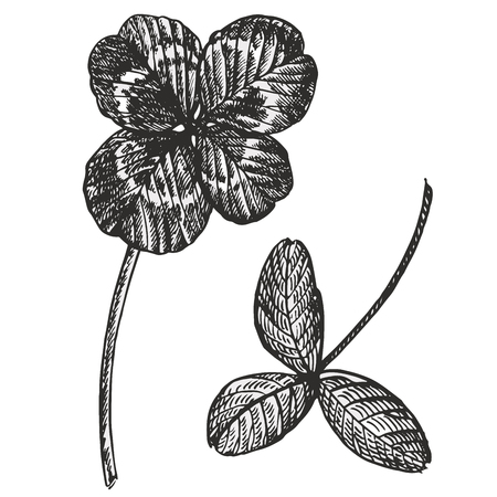 Clover vector set. Isolated wild plant and leaves on white background. Herbal engraved style illustration. Detailed botanical sketch.A set of clover leaves - four-leafed and trefoil