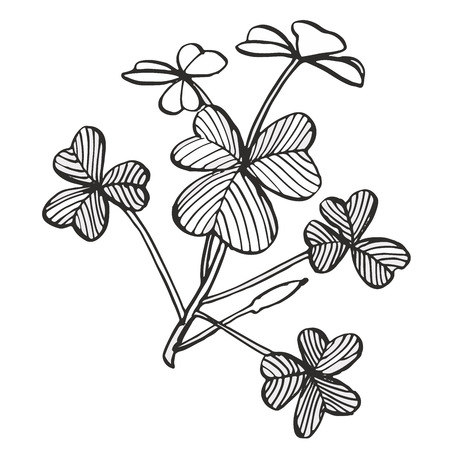 Clover vector set. Isolated wild plant and leaves on white background. Herbal engraved style illustration. Detailed botanical sketch.