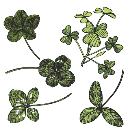 Green Clover vector set. Isolated wild plant and leaves on white background. Detailed botanical sketch. A set of clover leaves - four-leafed and trefoil