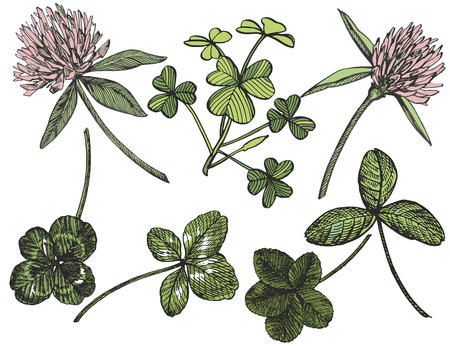 Clover vector set. Isolated wild plant and leaves on white background. Herbal engraved style illustration. Detailed botanical sketch. A set of clover leaves - four-leafed and trefoil.