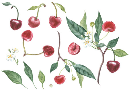 Set of Cherry on branch with flowers isolated, watercolor illustration. Stockfoto