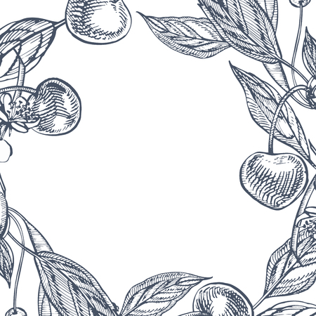 Cherry set. Hand drawn berry isolated on white background. Summer fruit engraved vector style illustration. Great for label, poster, print.