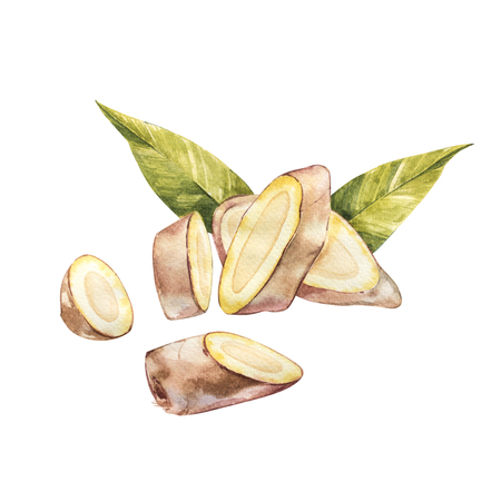 Hand Drawn Ginger watercolor sketch. Illustration For Food Design. Stockfoto