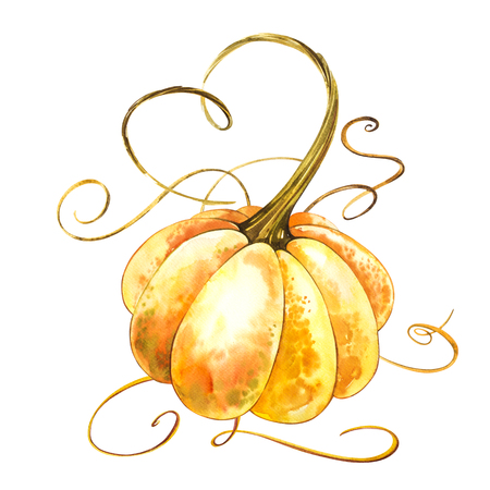 Pumpkin. Hand drawn watercolor painting on white background. Watercolor illustration.