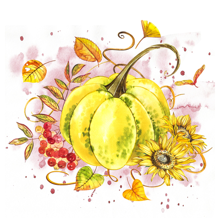 Pumpkins. Hand drawn watercolor painting on white background with splash. Autumn vegetables