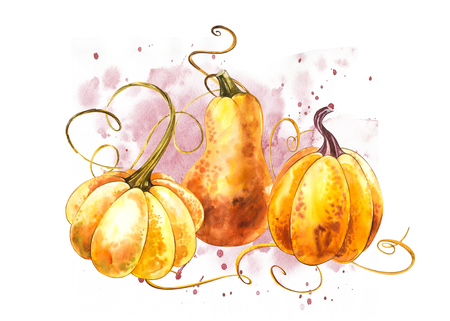 Pumpkins composition. Hand drawn watercolor painting on white background. Watercolor illustration with a splash. Happy Thanksgiving Pumpkin Stok Fotoğraf