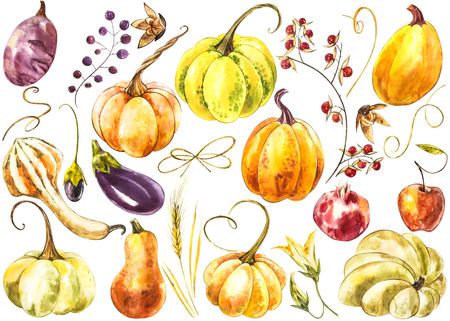 Big set of Pumpkins. Hand drawn watercolor painting on white background. Watercolor illustration.