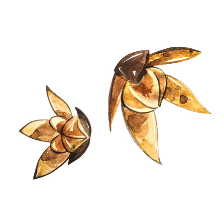 Stars of anise isolated on the white background. Watercolor illustration. Banco de Imagens