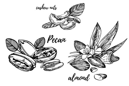 Almonds, Pecan and cashew nuts sketch illustrations. Vector Hand drawn illustrations isolated on white background Illustration