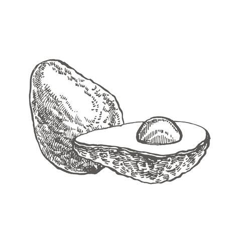 Avocado. Vector hand drawn illustrations. Tropical summer fruit engraved style illustration