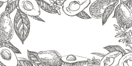 Avocado teamplate for postcards. Vector hand drawn illustrations. Avocado, sliced pieces, half, leaf and seed sketch. Tropical summer fruit engraved style illustration