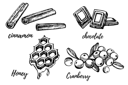 Honey, Cranberry, Chocolate and Cinnamon sketch illustrations. Hand drawn illustrations isolated on white background. Stock Photo