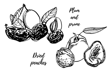 Dried peaches and Prunes, plums hand drawn illustration. Ink sketch of nuts. Hand drawn illustration. Isolated on white background.