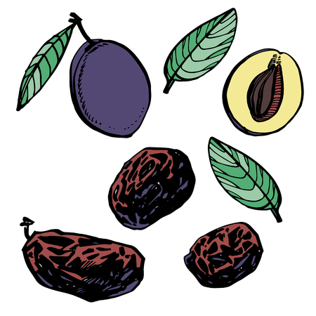 Prunes and plums hand drawn illustration. Ink sketch of nuts. Hand drawn illustration. Isolated on white background. Stockfoto